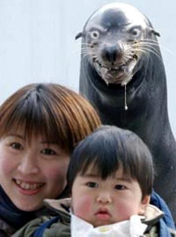 a7003ac87504c1c3dc70b8eee0d93fc8--sea-lions-the-zoo.jpg