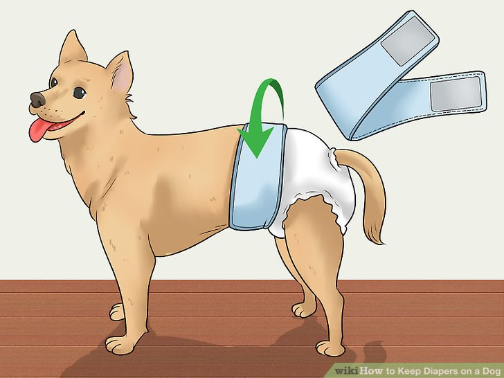 aid9283133-v4-728px-Keep-Diapers-on-a-Dog-Step-1-Version-2.jpg
