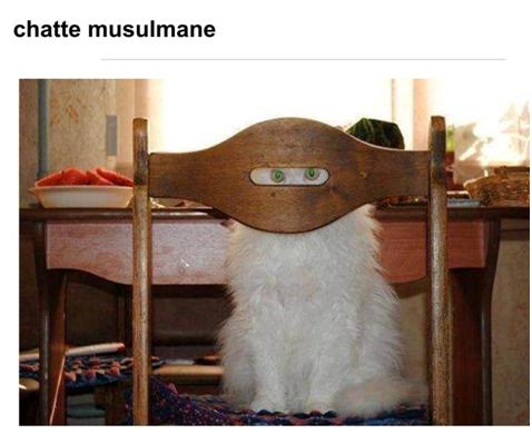 Muslim Cat.png